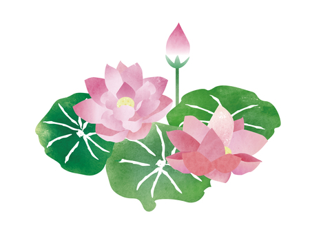 Lotus ☆ watercolor style