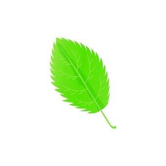 Jagged leaf 5