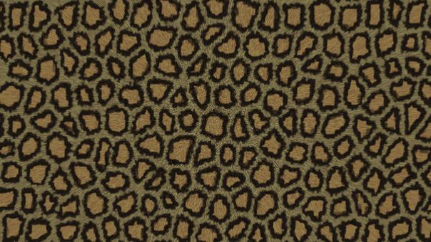 Leopard handle