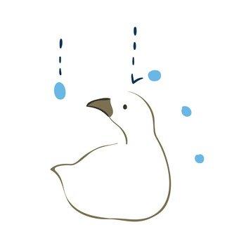Rain grains and ducks
