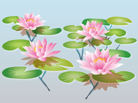 Water lily surface