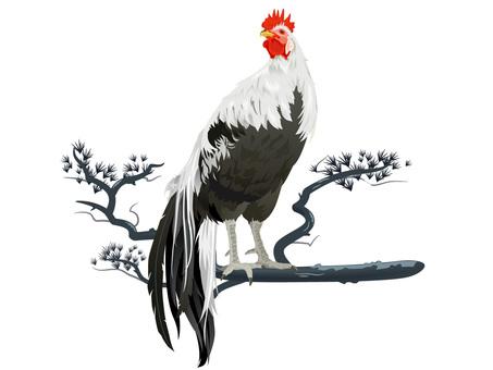 Horoz yılı tavuk, tavuk, tavuk bütün vücut malzemesi 06