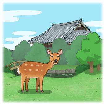 奈良公園和鹿