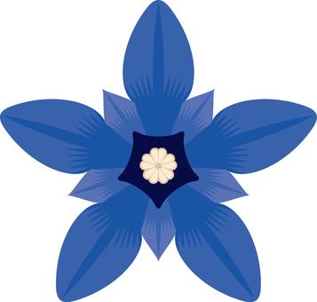 Flowers Gentian