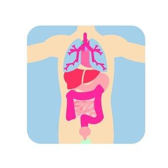 Organs 55