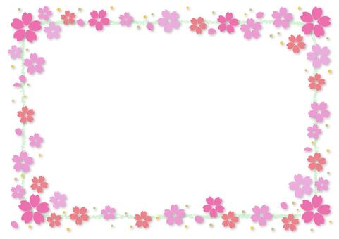 Cherry blossoms 319