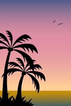 海/棕櫚樹/日落1