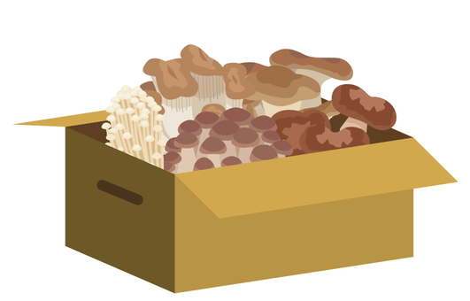 Mushrooms into cardboard