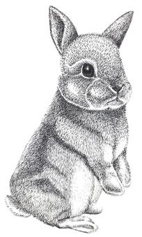 Rabbit pen drawing part 1