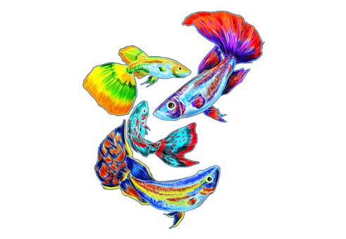 Tropical fish E