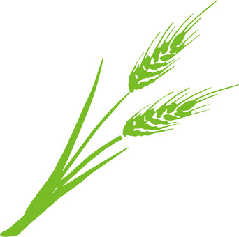 Wheat a_green_cs