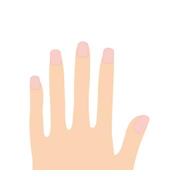 손과 손톱