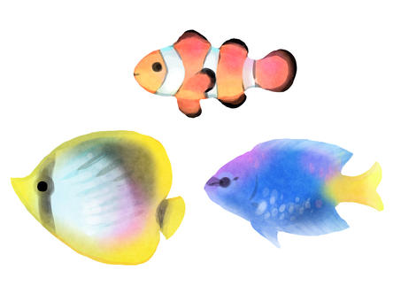Three kinds of tropical fish