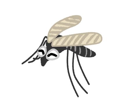 Striped mosquito