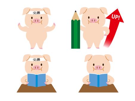 Study pig