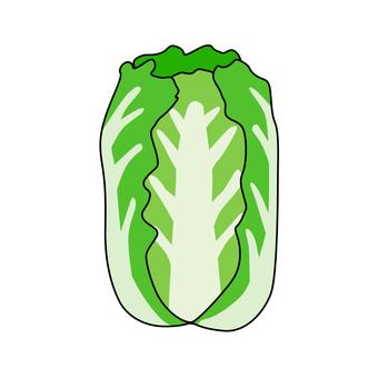 야채 배추