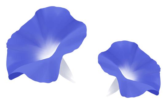 Morning glory (blue)