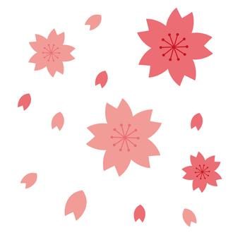 Sakura _ 01