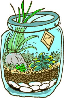 Bottling terrarium