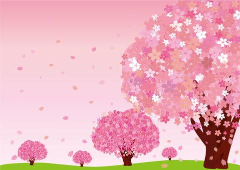 Sakura (postcard / background: cherry)