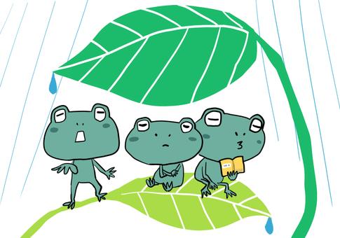 雨宿りするカエルたち