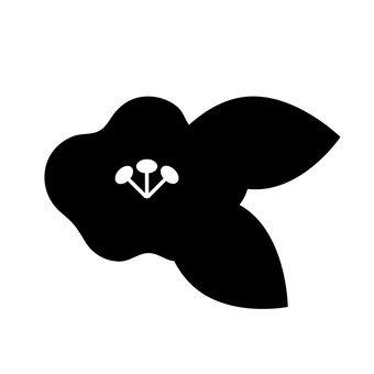 Camellia silhouette