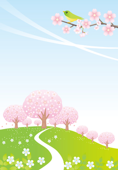 Vertical road to cherry blossoming hill