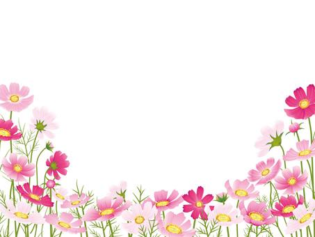 가을의 꽃 코스모스 자르기 03