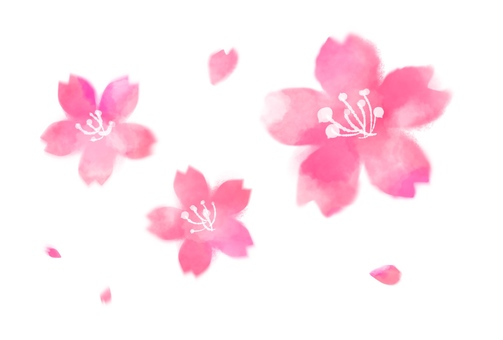 Cherry blossoms and flower petals watercolor