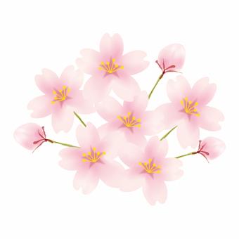 벚꽃 / 벚꽃 꽃송이