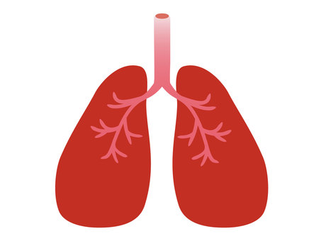 Illustration 1 of a simple lung