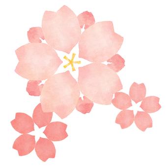Sakura 6