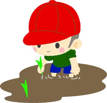 種植水稻的男孩
