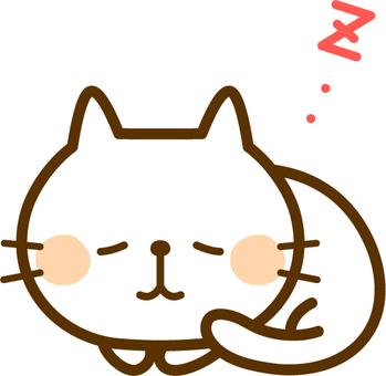 睡覺的白色貓