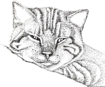 Cat drawing 1