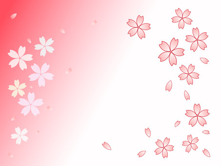 Cherry petal red and white background