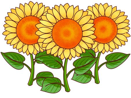 Sunflower 2 pencil