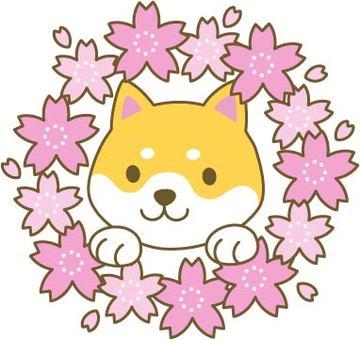 Sakura and Shiba Inu