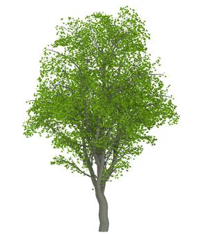 Trees _0002_04