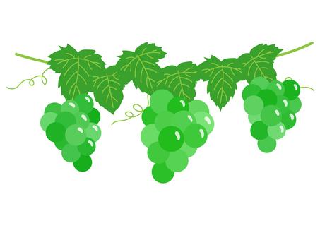 Grape shelf / green
