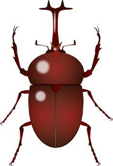 Beetle (male)