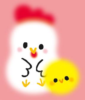 Fluffy chicken chick