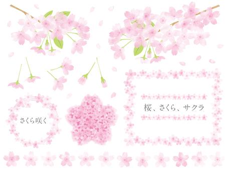 Sakura-12