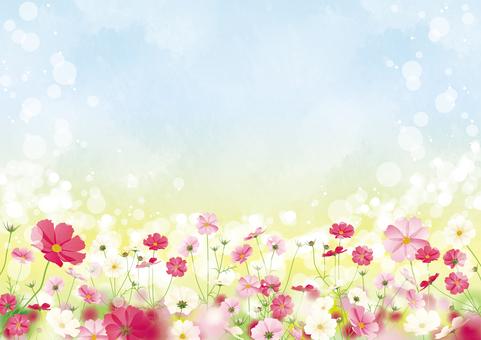 秋桜畑フレーム2