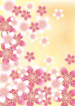 벚꽃의 꽃 81