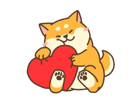 Heart shiba