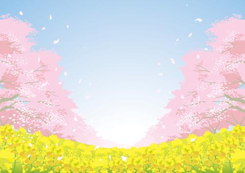 Sakura Material 10
