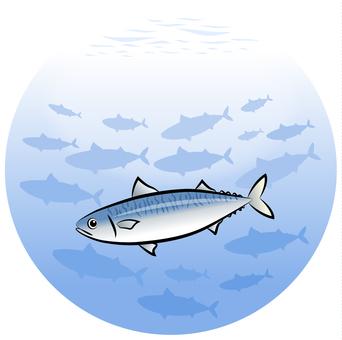 Flock of mackerel