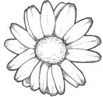 Daisy / colorless