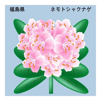 Nemoto Rhododendron